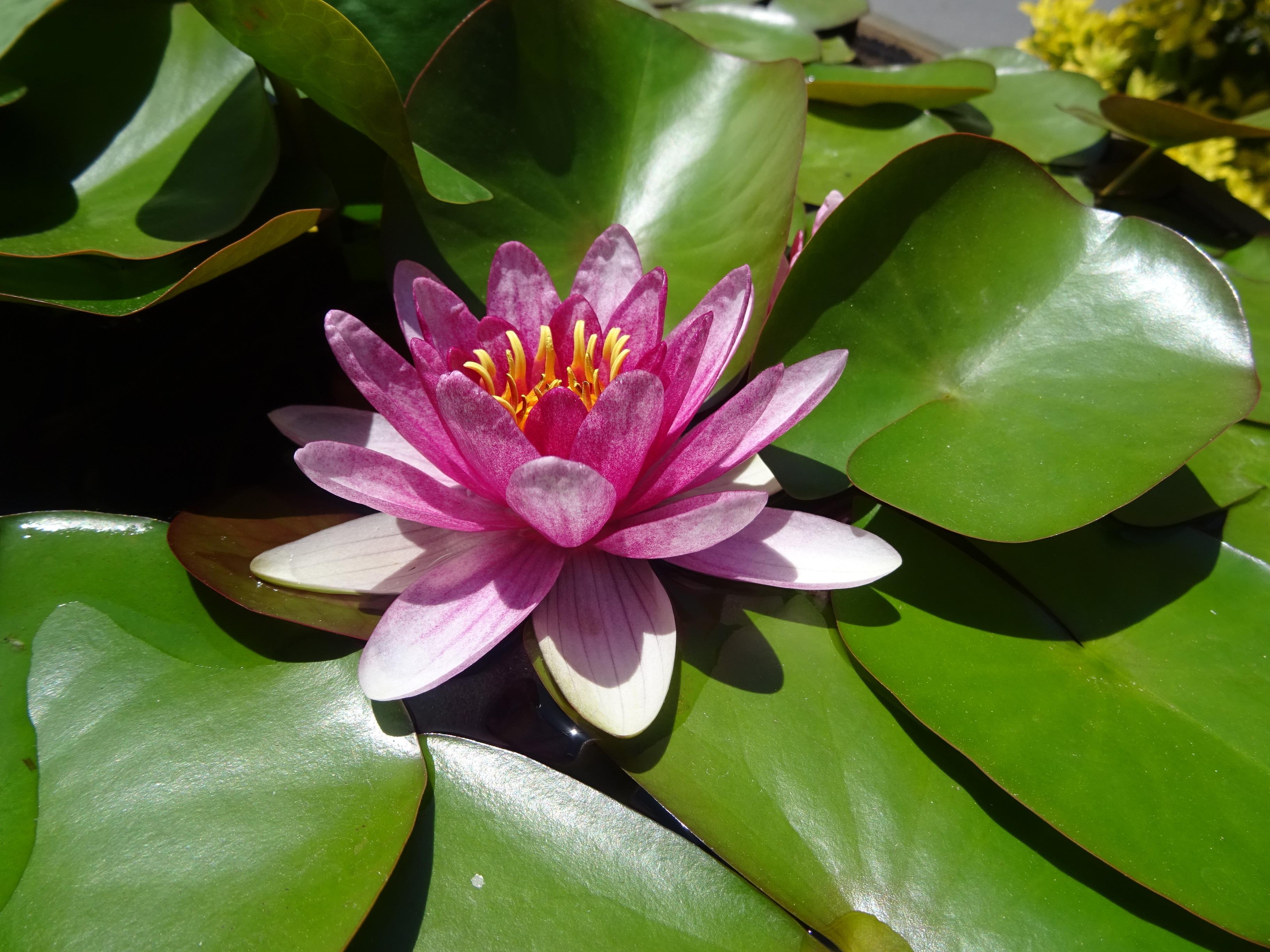 scared-lotus.jpg