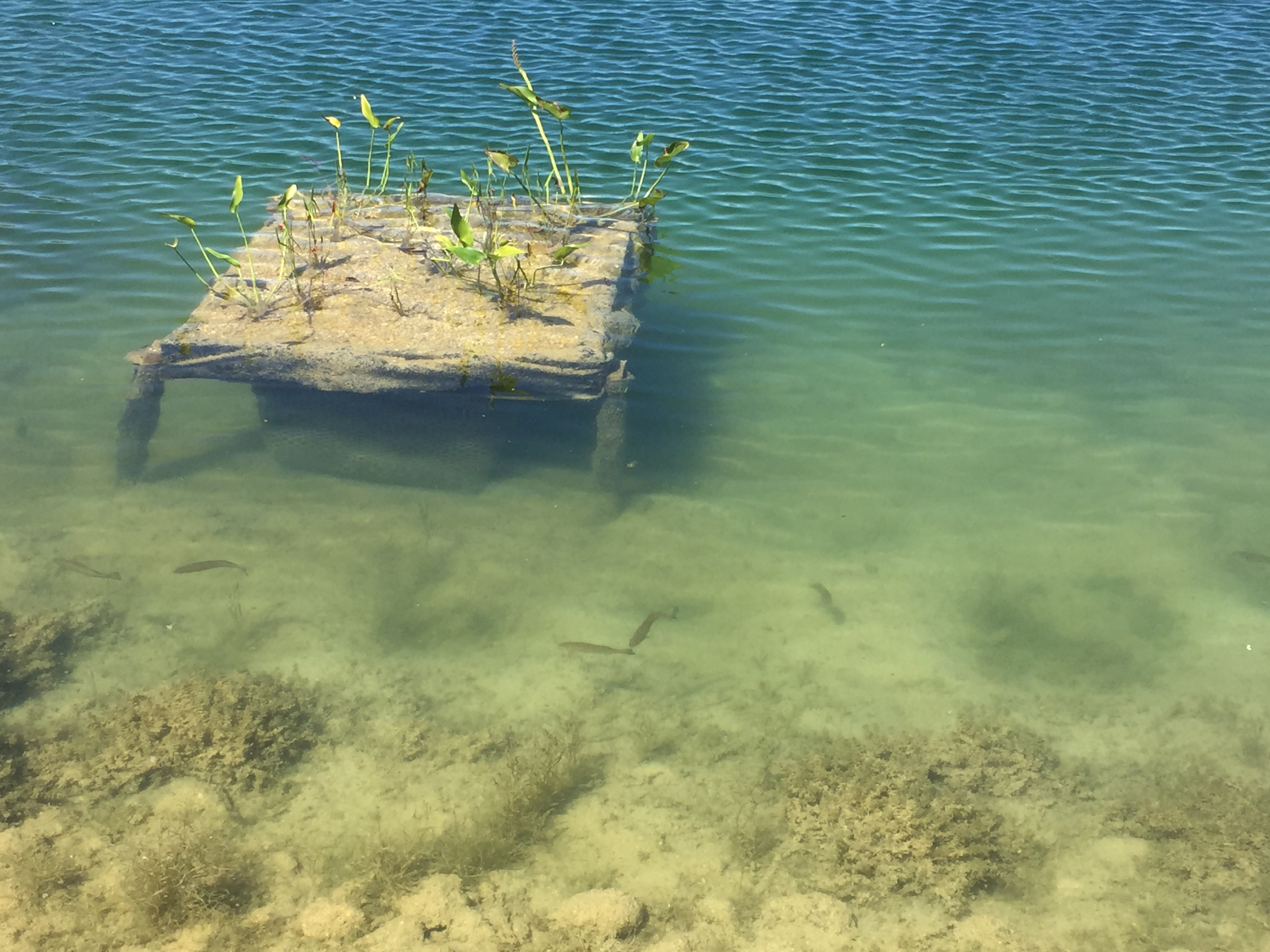 underwater-box-with-fish-smith-.jpg